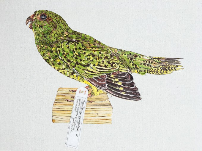 © Emma Lindsay 2016 Endangered night parrot (Pezoporus occidentalis, Tring at Natural History Museum)_oil on linen_ 30.5 (h) x 41cm (w)_Private collection. Photo E Lindsay
