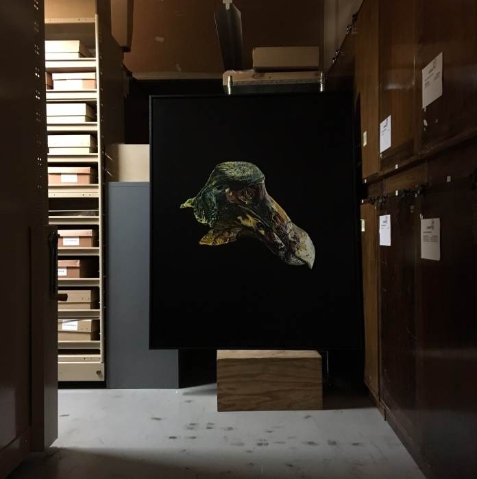 E Lindsay 2016, Extinct Dodo, (OUMNH at Oxford University Collection, Oxford UK), installation view in QM archive. Collection of the Artist.