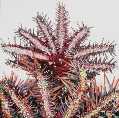 Emma Lindsay 2017, Two crown of thorns starfish (Lizard Island Research Station), oil on board, 30 x 30cm